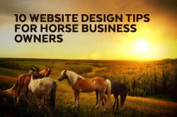 10 Website Design Tips for Horse Business Owners