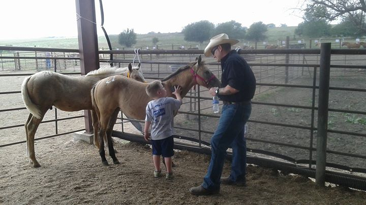 Horse Sales and Auctions Near You | Find Your Next Dream Horse!